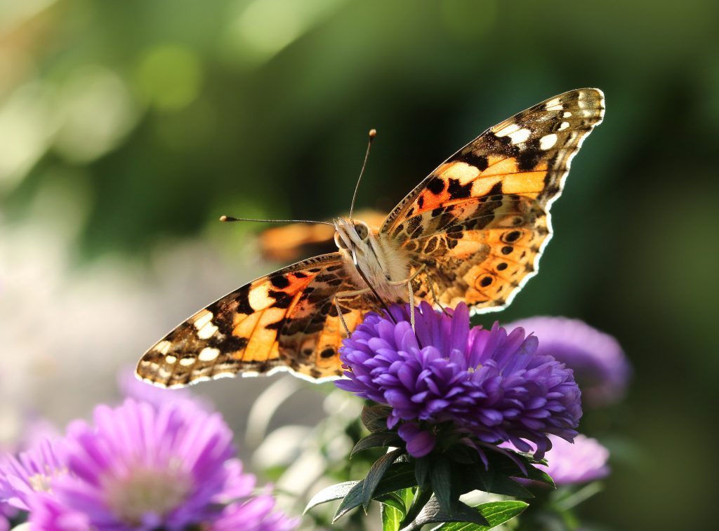 Butterfly Miscarriage Quotes